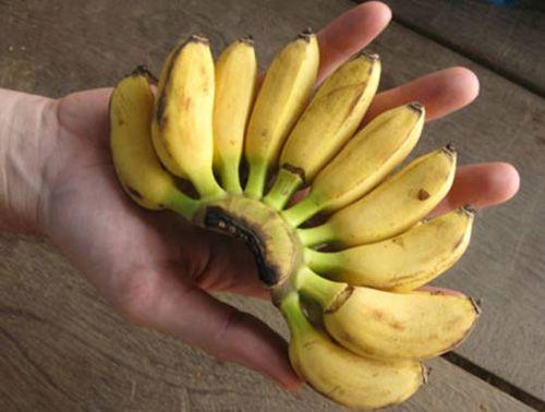 Маленькие бананы