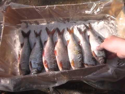 Соление рыбы в ящике на целлофане