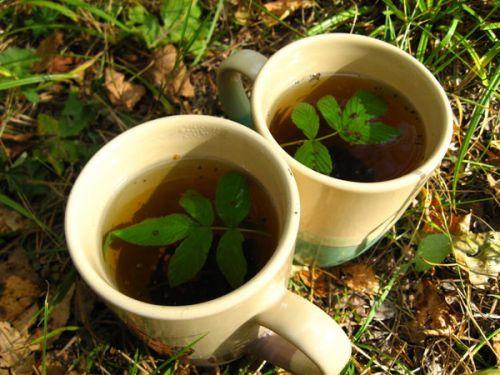 Чай на природе