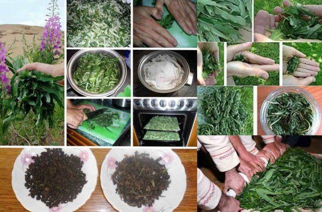 Приготовление чая из кипрея