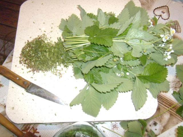 Заготовка земляничных листьев