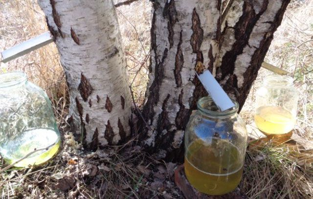 Желтый березовый сок