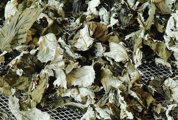 Сушеные листья смородины
