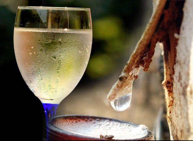 Шампанское из березового сока