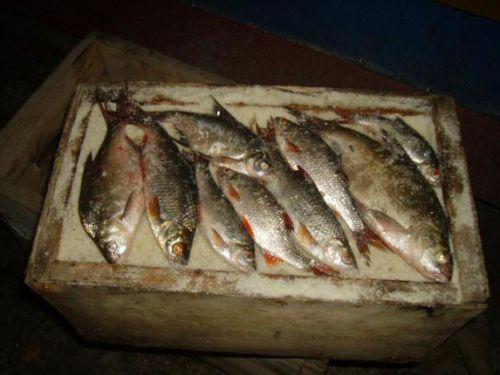 Засолка рыбы в ящике