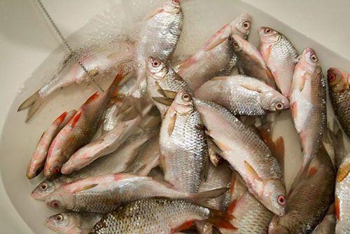 Промывание рыбы в холодной воде