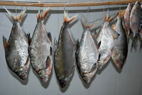 Подвешенная для сушки рыба
