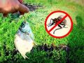 Защита рыбы от мух